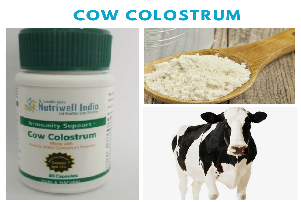 cow colostrum